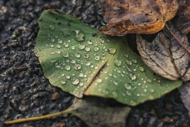 Don't become a Wet Fallen Leaf!
