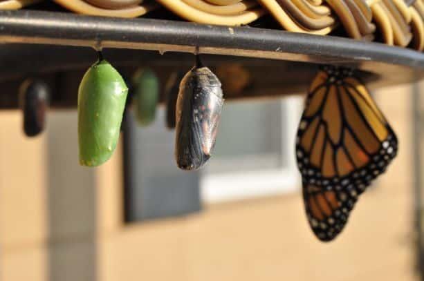 Transformational Life Planning